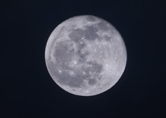 PC122219aacrop (Pussreboots) Tags: moon fullmoon 2019