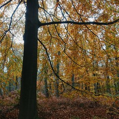 autumn forest 🍂🍄🍁 (Jos Mecklenfeld) Tags: herfst herbst autumn bos wald forest natuur natur nature rnifilms
