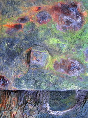 Rusty iron plate (Lawrence Sibley) Tags: rust ironplate wharf closeup abstract