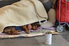 DSC_5162_5825 . Sweet dreams! (angelo appoloni) Tags: torino via roma senzatetto riposo sotto portici
