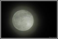 cloudy_full_moon_Dec_2019_001 (truszphoto) Tags: toronto fullmoon moon cloudy nikonp900 handheld