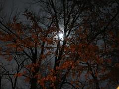 Night Colours - December Moon (Pushapoze (MASA)) Tags: moon lalune trees leaves laluna feuilles