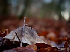 Wunder der Natur (Jens Schröter) Tags: deutschland de badenwürttemberg schwäbischealb wald pilz mushroom macro makro fungi herbst