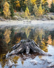 Frosty morning (blue5011b) Tags: treetrunk smooth calm trees lake d810 nikon color fall autumn frost cold reflection landscape germany blackforest