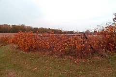 Fenced Friday The 13th - HFF & TGIF! (Daryll90ca) Tags: fencedfriday fence autumn fall