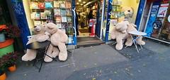 292 Paris Novembre 2019 - avenue des Gobelins (paspog) Tags: paris france novembre november 2019 avenuedesgobelins oursenpeluche teddybear