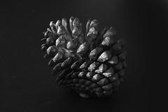 pinecone (Wendy:) Tags: pinecone mono patterns nature fibonacci
