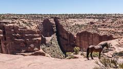canyon de Chelly (Monedero michel) Tags: amérique 2012 arizona etatsunis chinie america chinle étatsunis