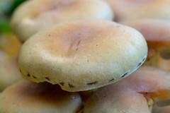 Sulphur Tuft (François dt) Tags: em1markii olympus nature mushroom macro autumn fungi fall
