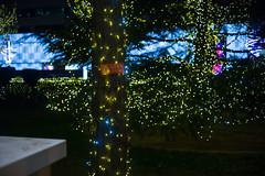 electricity-xmas2 (echt.jut) Tags: beijing winter