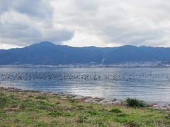 Waterfowl on Biwako (Greg Peterson in Japan) Tags: 甲賀市 比叡山 kusatsu japan biwako mountains 滋賀県 shiga hieizan shigaprefecture