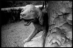 Arfy (w.l. warner) Tags: asahi pentax spotmatic spii light bw usa film 35mm time northcarolina gravity silence dust stillness biltmoreestate watervapor buncombecounty dog puppy statuary dogstatue
