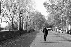 Quai Henri IV (just.Luc) Tags: fall autumn automne herbst herfst trees bomen árbol arbres bäume parijs parigi paris îledefrance france frankrijk frankreich francia frança bn nb zw monochroom monotone monochrome bw europa europe