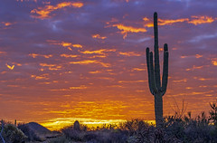 lone-cactus-IMG1a_7657 (Ray Redstone) Tags: arizonasunrise sunrise arizonalandscape dawn desertsunrise cactus mountains range desertview arizonascenery clouds twilight dramatic nature beauty cloudscape light outdoors sky colorful orange phoenix