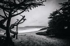 Pebble Beach, Ca (FedeSK8) Tags: fedesk8 federicoscottophotography california pacific coast nikond7000 black blackwhite sigma1020mm fedescotto