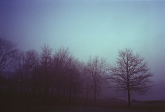 img012 (louieblondet) Tags: film photography analog grain home developed olympus xa kodak ultramax 400 fog