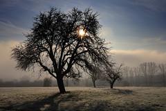 December Morning (moments in nature by Antje Schultner) Tags: winter morgen raureif frost baum nebel fog wetter weather
