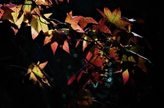 CA (Elena Parra) Tags: autumn color colours leaf leaves nature natural forest field fields season park out cold wind green pink dark darkness shadows shadow contrast light lights sun sunny sky free plant plants tree trees