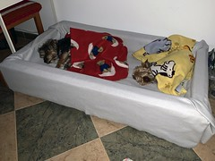 Jerry&Lucy_0585 (Wayloncash) Tags: spanien spain andalusien hunde hund dog dogs animals animal tiere tier