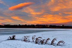 Beached (stevenbulman44) Tags: tree fallen frozen snow ice dramatic shore branch canon 2470f28l filter lee gndfilter winter water reservoir calgary alberta sky pink color landscape outdoor white