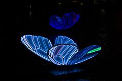 Enlightened butterflies (paolotasseron) Tags: abstract butterfly butterflies light art water night amsterdam colours color colors