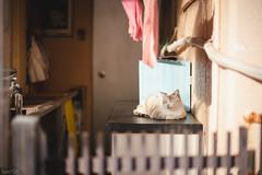 猫 (fumi*23) Tags: ilce7rm3 sony street a7r3 animal alley cat chat cosina katze gato neko voigtlander nokton 58mm voigtländernokton58mmf14slⅱ manualfocus ねこ 猫 ソニー コシナ ノクトン フォクトレンダー feline fmount