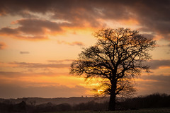 Sunset . . (Jez22) Tags: jeremysage photography sunset woodchurch kent rural england sundown copyright light silhouette landscape tree outdoor colourful color twilight nature