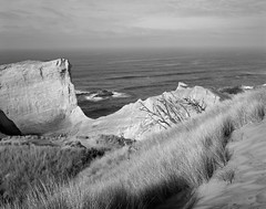Cape Kiwanda, Oregon (austin granger) Tags: capekiwanda oregon coast pacific grass cliffs geology time sandstone film largeformat chamonix seastacks