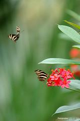 0207 (jhnanna71) Tags: butterfly callerwaygarden georgia