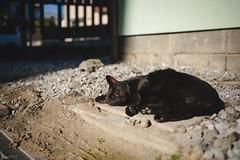 猫 (fumi*23) Tags: ilce7rm3 sony sel35f18f emount 35mm a7r3 animal alley katze gato feline cat chat neko ねこ 猫 ソニー fe35mmf18
