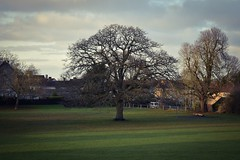 2019-12-13_06-33-29 (leighshort44) Tags: nikon countryside pucklechurch evening green village oaktree