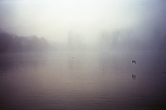 img014 (louieblondet) Tags: film photography analog grain home developed olympus xa kodak ultramax 400 fog