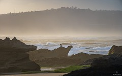 Some Bird in Wilderness (Wim Air) Tags: beach wilderness southafrica bird tele zoom 300mm wimairat africa sunset sundown