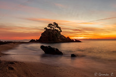 Un nou dia (gercade) Tags: sunrise amanecer alba mar sea long exposure larga exposición llarga exposició sol sun beach platja playa arena sorra sand arbol tree roca cap roig cala costa brava girona