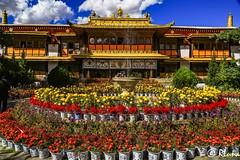 LHASA (RLuna (Instagram @rluna1982)) Tags: tibet lhasa lasa dalailama budismo palace potala himalaya everest asia china rluna rluna1982 travel photo cultura arte monastery moonks norbulingka