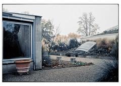 (schlomo jawotnik) Tags: 2019 november hannover herrenhäusergärten berggarten kakteenschauhaus sealife töpfe kies fenster luke bäume analog film kodak kodakportra160 usw