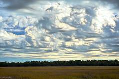 Savannah Wetlands (paulgarf53) Tags: wetlands savannah georgia clouds sky topaz topazstudio2 weather nature nikon d700