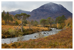 (Light Magnetic) Tags: torridon plant scotland tree highlands caledonianpine agairbhe river landscape westerross uk mountain