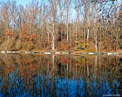 Aurumn reflections at a side arm of the Rhine (Mike Reichardt) Tags: herbst herbststimmung autumn autumnmood altrheinarm rhein rheinlandpfalz landscape landschaft palatinate germany deutschland