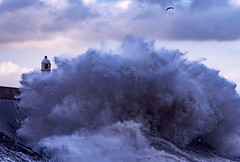 Explosion (Wildlife & Nature Photography) Tags: porthcawllighthouse porthcawl sea wave clouds bird nikon seascape wales ocean power storm gales seascapephotography turbulent cymru water uk britain tide