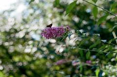 000031960030 (alexdotbarber) Tags: 11000 35mmnegative c41 contax45mmf2carlzeissplanart contaxg2 fairfaxcounty kodakportra400 virginia analog analogphotography autofocus bokeh colornegative expiration022021 f4 film filmphotography flower moth