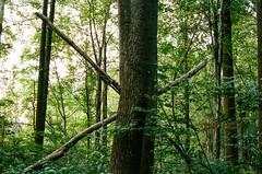 000031960033 (alexdotbarber) Tags: 130 35mmnegative c41 contax45mmf2carlzeissplanart contaxg2 fairfaxcounty kodakportra400 virginia x analog analogphotography autofocus colornegative expiration022021 film filmphotography trees