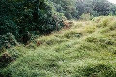 000031960035 (alexdotbarber) Tags: 160 35mmnegative c41 contax45mmf2carlzeissplanart contaxg2 fairfaxcounty kodakportra400 virginia analog analogphotography autofocus colornegative expiration022021 f8 film filmphotography green trees