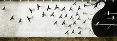 Why stoop when you can fly (crowt59) Tags: birds mural joplin mo missouri church scriptures flying dark light crowt59 nikon d850 sigma 1224mm a route 66 nikonflickraward