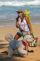 Different Strokes (RicoLeffanta) Tags: dog mistress beach sandy ehukai north shore oahu hawaii usa rico leffanta wsl billabong pipe masters banzai pipeline world surf league