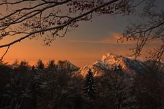 Daybreak in winter (echumachenco) Tags: dawn daxbreak pink sky cloud tree forest winter snow landscape outdoor alps mountain mountainside branch twig wood gersberg gaisberg untersberg salzburg austria österreich nikond3100