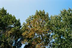 000031960029-Edit (alexdotbarber) Tags: 1250 35mmnegative c41 contax45mmf2carlzeissplanart contaxg2 fairfaxcounty kodakportra400 virginia analog analogphotography autofocus colornegative expiration022021 f11 film filmphotography trees