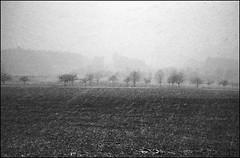 schneegestöber 2 (jo.sa.) Tags: analog schwarzweiss bw sw kleinbild winter schnee bäume