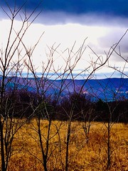 twiggs on Dolly (GAWV) Tags: dollysods pendletoncounty westvirginia mountains alleghenymountains fog rain clouds trees twiggs fence winter cold
