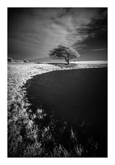 Ditchling Beacon / December 8th (Edd Allen) Tags: infrared ditchlingbeacon bw blackandwhite tree sussex eastsussex uk england south southeast nikond610 nikon d610 zeissdistagon zeiss 18mm monochrom atmosphere atmospheric clouds winter sunset light bucolic serene country countryside